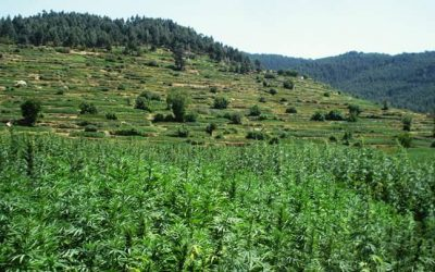 Morocco moves to legalize cannabis for medical and industrial use